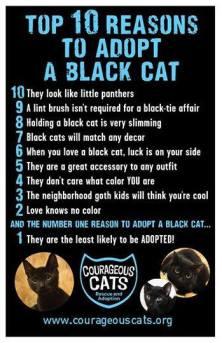 Cats - Black reasons to adopt 01