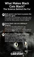 Cats - Black what makes cats black