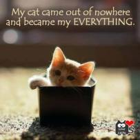Cats - Came out of nowhere but became my everything