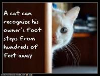 Cats - Can recognize owner's footsteps