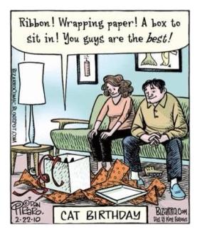 Cats - Cartoon