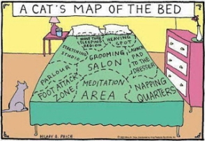 Cats - Cartoons map of the bed