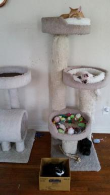 Cats - Castles and trees 11