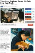 Cats - Cat trade killers in China story