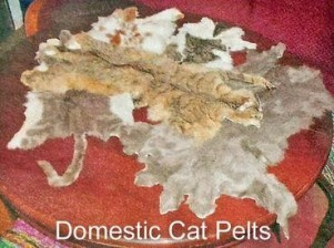 Cats - Domestic pelts dealing in the USA, esp. Wisconsin where there are special markets