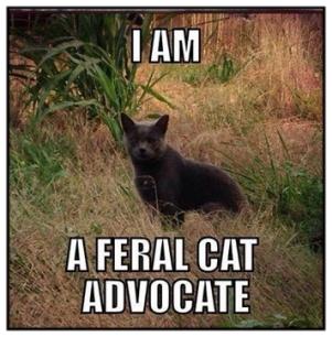 Cats - Feral cat advocate