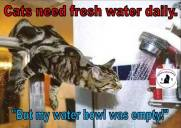 Cats - Food water need fresh daily