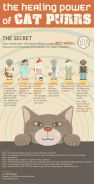 Cats - Healing power of purrs