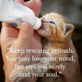 Cats - Kitten feed rescuing