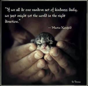 Cats - Kitten kindness