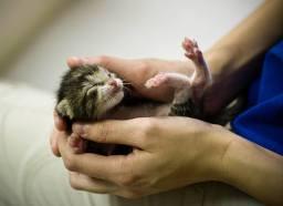 Cats - Kitten so vulnerable