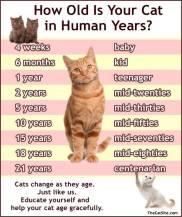 Cats - Medical age calculator