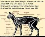 Cats - Medical bones number
