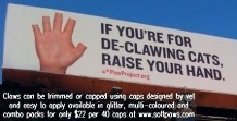 Cats - Medical declawing blood