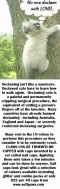 Cats - Medical declawing info USE