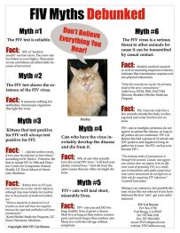 Cats - Medical FIV myths debunks