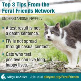 Cats - Medical FIV pic info short