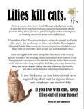 Cats - Medical plants kill cats 01