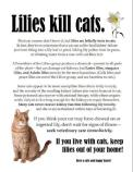 Cats - Medical plants kill cats 01