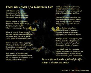 Cats - Poem from a homeless cat
