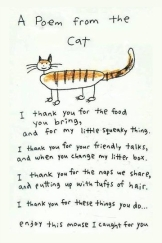 Cats - Poem from the cat