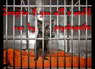 Cats - Psychopaths imagine a world 01