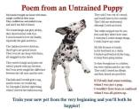 Dog - Puppy untrained poem from an