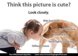 Dogs - Aggressive