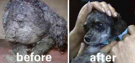 Dogs - Before and after