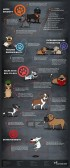 Dogs - Benefits of owning a dog 2 of 2