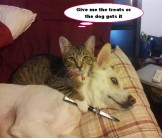 Dogs - Cats 01