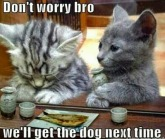 Dogs - Cats 10
