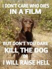 Dogs - Don't die in film