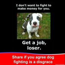 Dogs - Fighting get a job