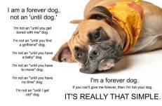 Dogs - Forever dog