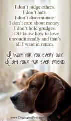 Dogs - Friend true