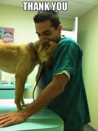 Dogs - Grateful