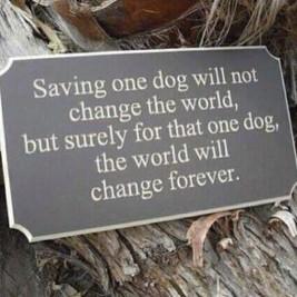 Dogs - Help saving one dog