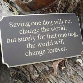 Dogs - Help saving one dog
