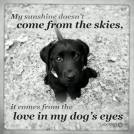 Dogs - Love in his eyes