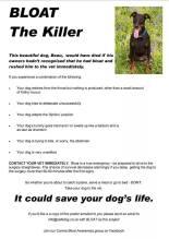 Dogs - Medical bloat the killer