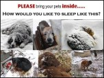 Dogs - Medical chained outside in the cold 2