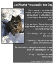 Dogs - Medical cold