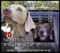 Dogs - Medical hot car safety 01