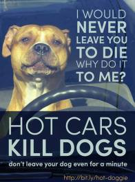Dogs - Medical hot car safety 04