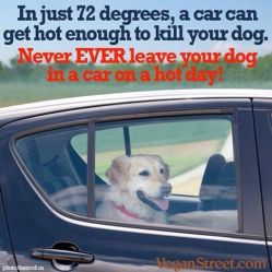 Dogs - Medical hot car safety 05