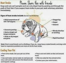 Dogs - Medical hot car safety 07