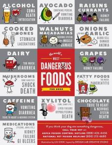 Dogs - Medical toxic foods 2