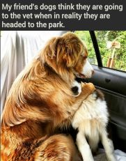 Dogs - Medical vets think they are going
