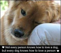 Dogs - Not every person knows how to love a dog